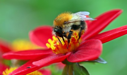 Therapeutic effects of bee pollen